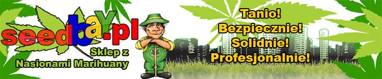 nasiona marihuany, konopi, cannabis, tanio, sklep, seedbay